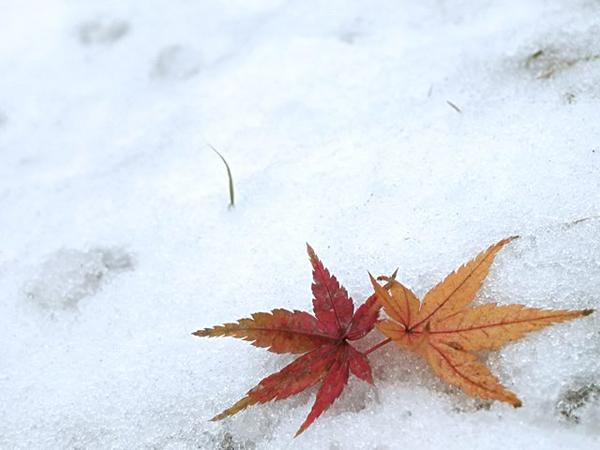 snow_L