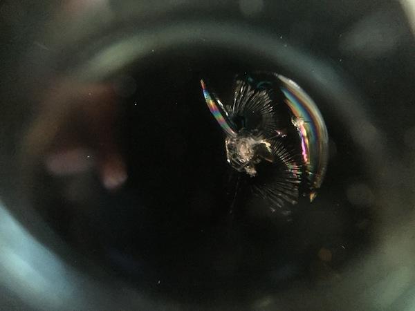 ヴォクシーのフロントガラスリペア